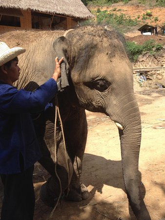 Ran-Tong Save & Rescue Elephant Centre: Meet and greet