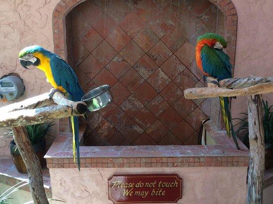Inn at Cocoa Beach: Their birds (don't touch)