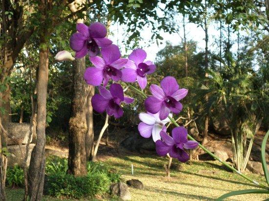 Khao Hin Lek Fai: wild orchids