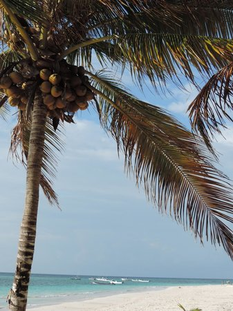 Catalonia Royal Tulum : Coconut trees and white sand beach