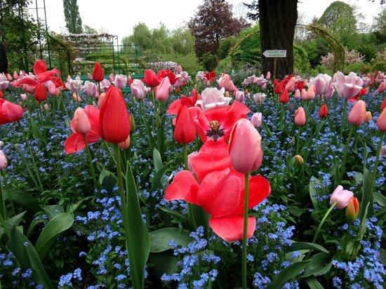 Maison et jardins de Claude Monet : Flores no Jardim de Monet