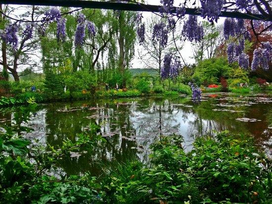 Maison et jardins de Claude Monet : Ninféias