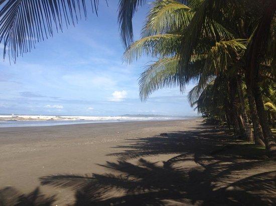 Alma del Pacifico Beach Hotel & Spa : Hermosa playa de Esterillos Este