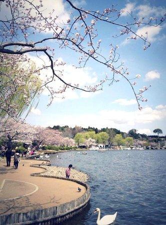 Semba Boadwalk: 桜が見事な遊歩道