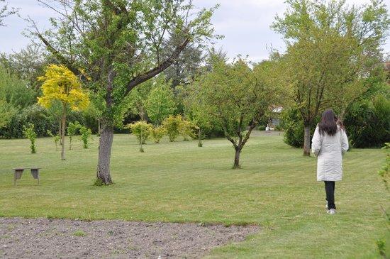 Le Verger du Sausset : Garden picture, with fruit trees