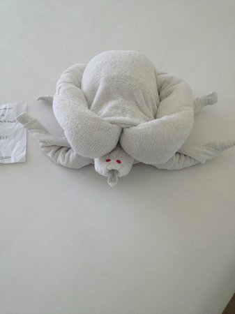 The Akmani Legian: Turtle from Erik @ housekeeping