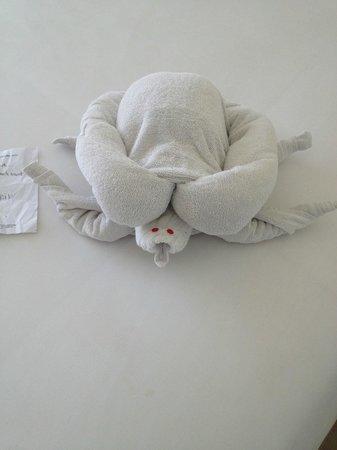 The Akmani Legian : Turtle from Erik @ housekeeping