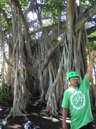 Pedal Bike Tours: Pono explaining the history of the Banyan tree