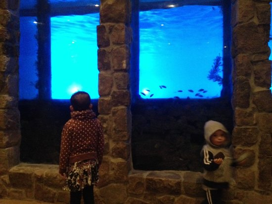 Minerals Hotel: Fish tank at pool.  If someone is swimming you can see them through the fish tank.