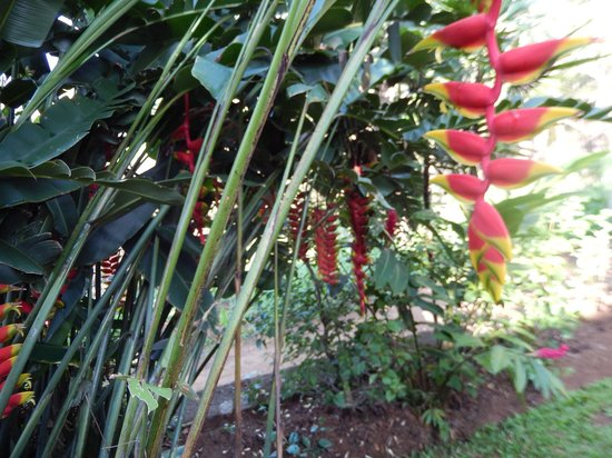 Elegant Hotel: One of the many exotic plants in the garden