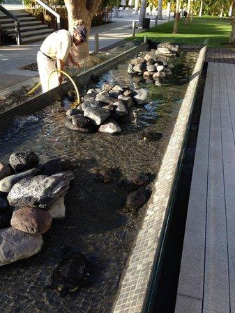 IBEROSTAR Grand Hotel Mencey: Cute tortugas in their habitat!