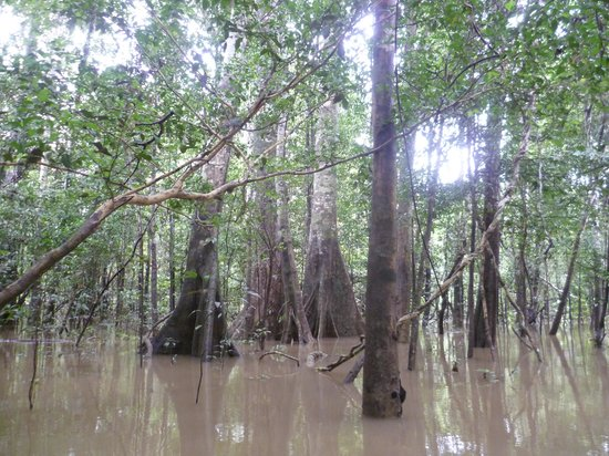 Zacambu Rainforest Lodge: The jungle during the wet season