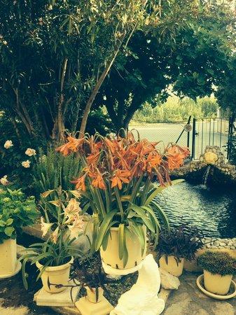 Anna Aparthotel: Garden
