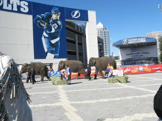 Amalie Arena : TBTF West Plaza  & Ringling Brothers circus elephants