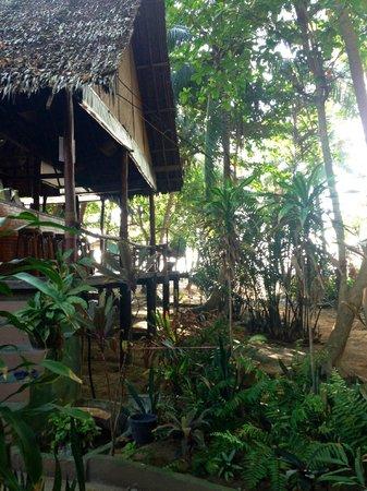 The Sanctuary Thailand: View through the trees