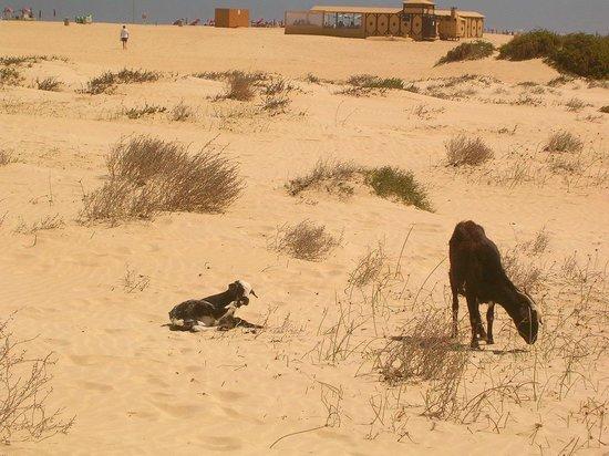 ClubHotel Riu Oliva Beach Resort: Isla de Los Cabras ( Ziegeninsel,überall , keine Hunde