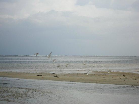 Jamelah Beach Guest House : beach