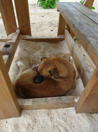 Jamelah Beach Guest House : the friendly dog