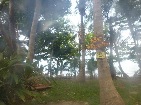 Paradise Palms Resort : the garden jungle