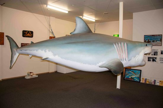 Great White Shark Replica