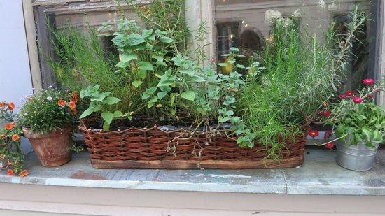 Weranda Caffe: Plants everywhere