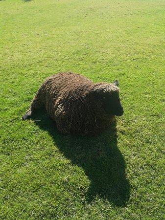 Langdam-in-Koo Guest Farm: Sheep