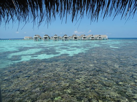 Centara Grand Island Resort & Spa Maldives: Stunning coral reef