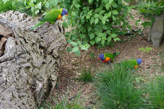 Prager Zoo: зоо