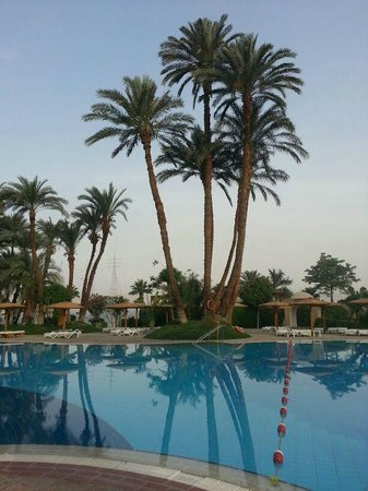 Mercure Luxor Karnak : Pool