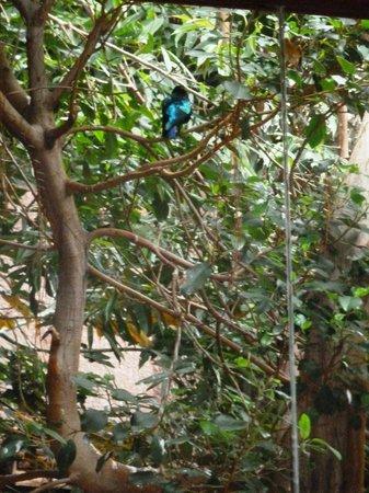 Hotel Botanico & The Oriental Spa Garden: Aviary: blue-sheened bird