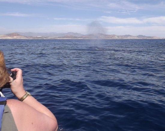 Cabo Expeditions : Thar she blows