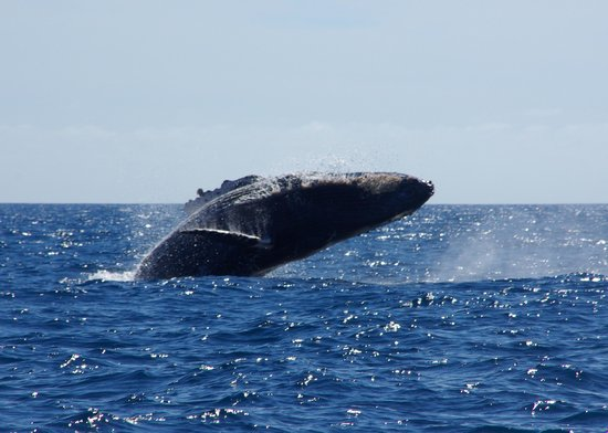 Cabo Expeditions : Worth the wait