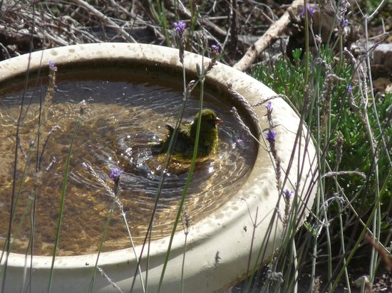 Cliffhanger Cottages : The birds love bathing infront of the cottage