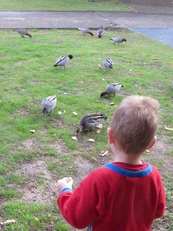 Seashells Beachfront Resort: Feeding ducks from just outside room