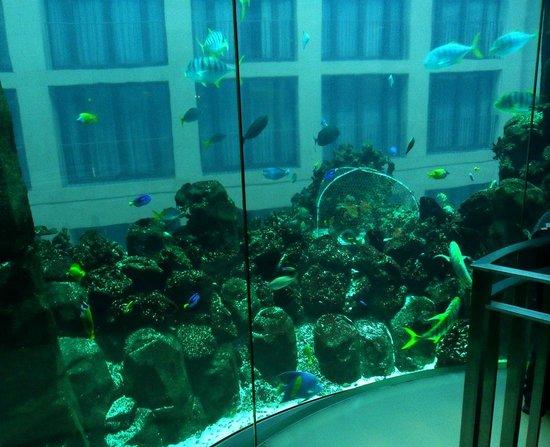 AquaDom & SEA LIFE Berlin: acsenseur aquarium