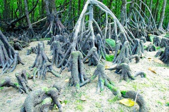 Miyara River Hirugi Grove: 奇怪な根っこ