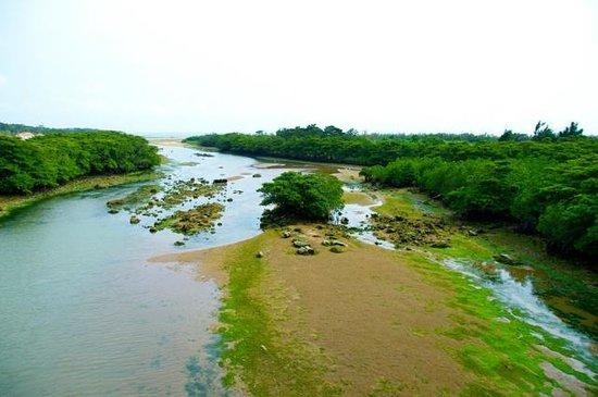Miyara River Hirugi Grove: 橋の上から