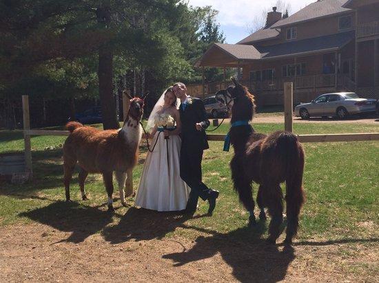 Storybook Farm Llama Trekking B&B: Beautiful wedding!!