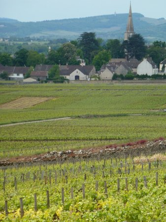 Le Montrachet : Looking back at the vineyards