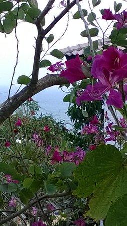 Melon Resort : Uitzicht van het balcon