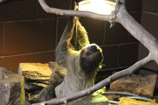 ZSL London Zoo : Sloth needs some warmth.