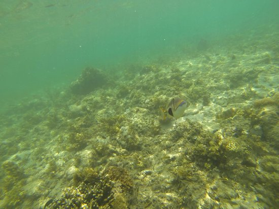 Coco Beach Island Resort: Curious fish