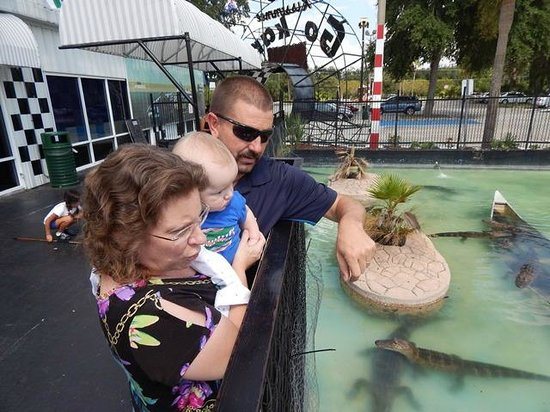 Kissimmee Go-Karts: Alligator pond