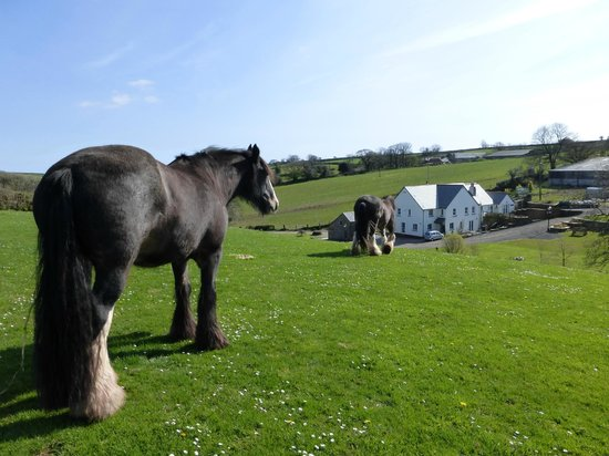 Pollardscombe Farm: Beauty and Barney the Shire Horses