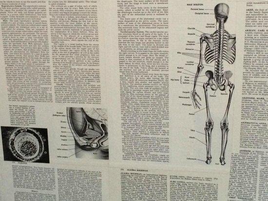 OK Hotel : Изображения на газетах на стенах номера (скелет и изображение женских гениталий)
