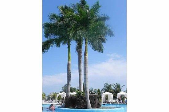 Luxury Bahia Principe Runaway Bay Don Pablo Collection: executive pool
