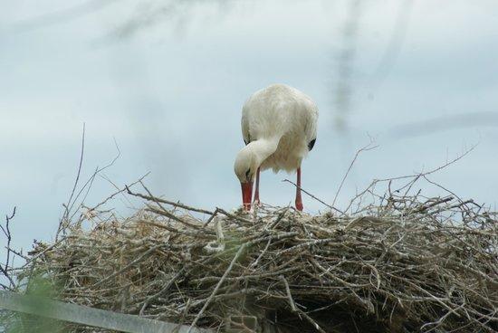 Le Parc Ornithologique de Pont de Gau : c'est l'heure du bib