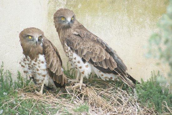 Le Parc Ornithologique de Pont de Gau : souriez vous etes filmes !!!!