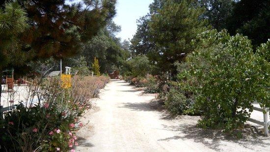 Rancho Ojai: Area de picnic