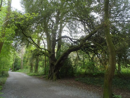 Kilkenny Castle: In the garden